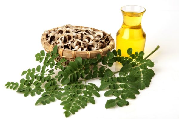 Moringa, aceite, semillas