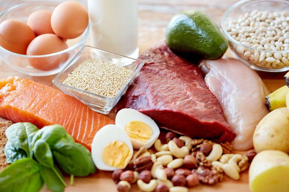 Alimentacion vegetal animal y humana